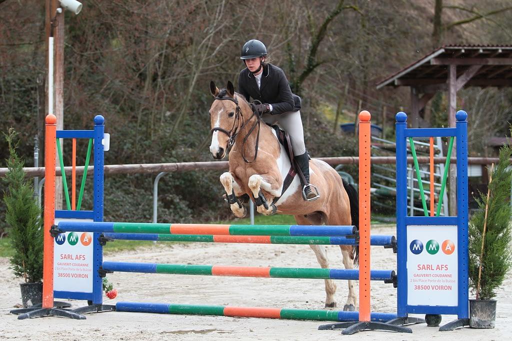 Cheval sautant un obstacle oxer