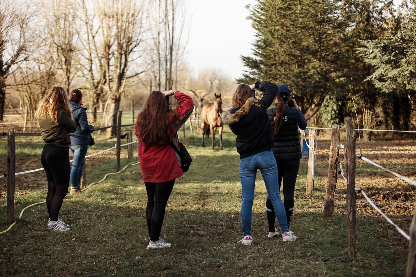 Rencontre photo : des photographes prenant en photo un cheval - Faustine Gauchet