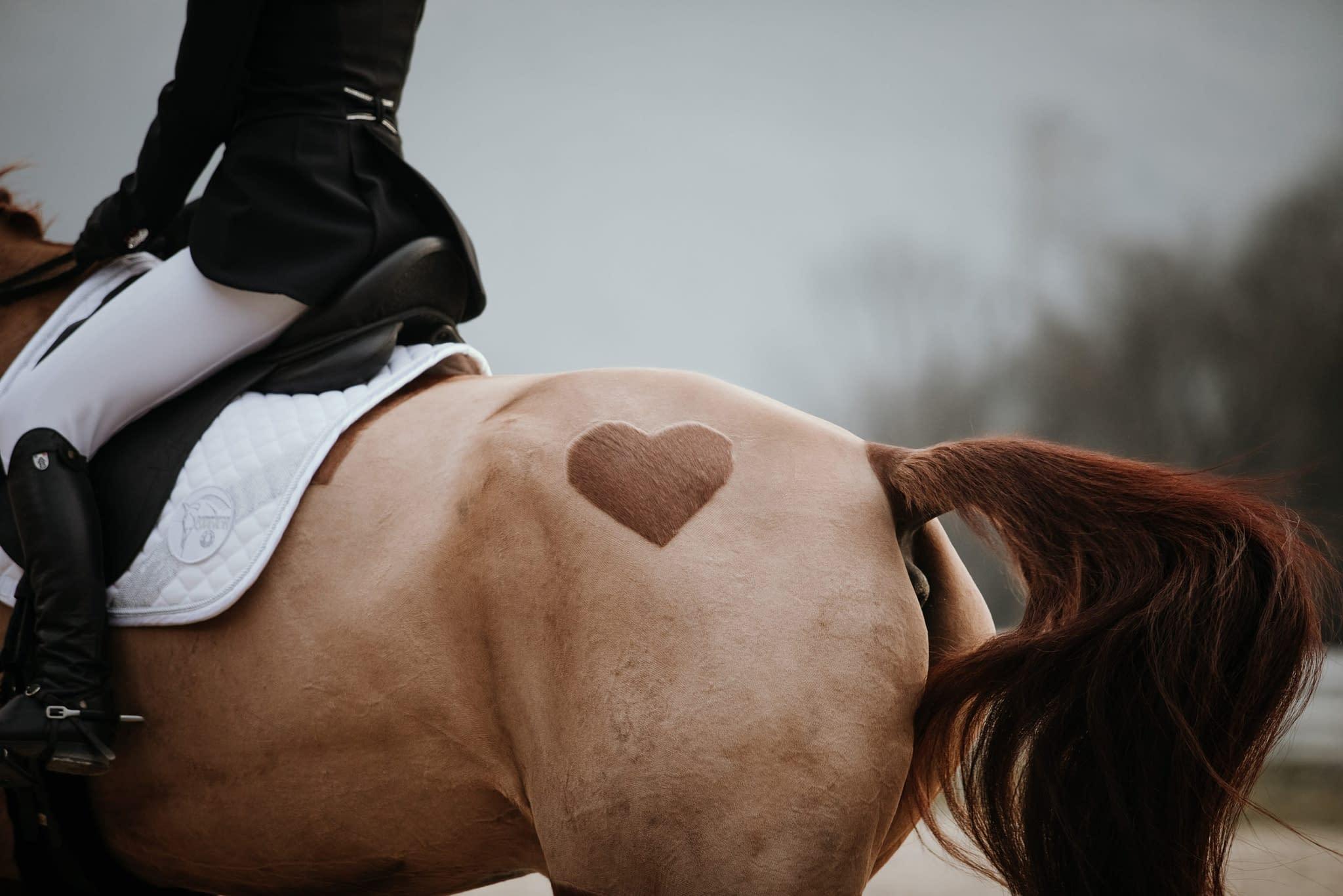 détail coeur tondu sur la croupe