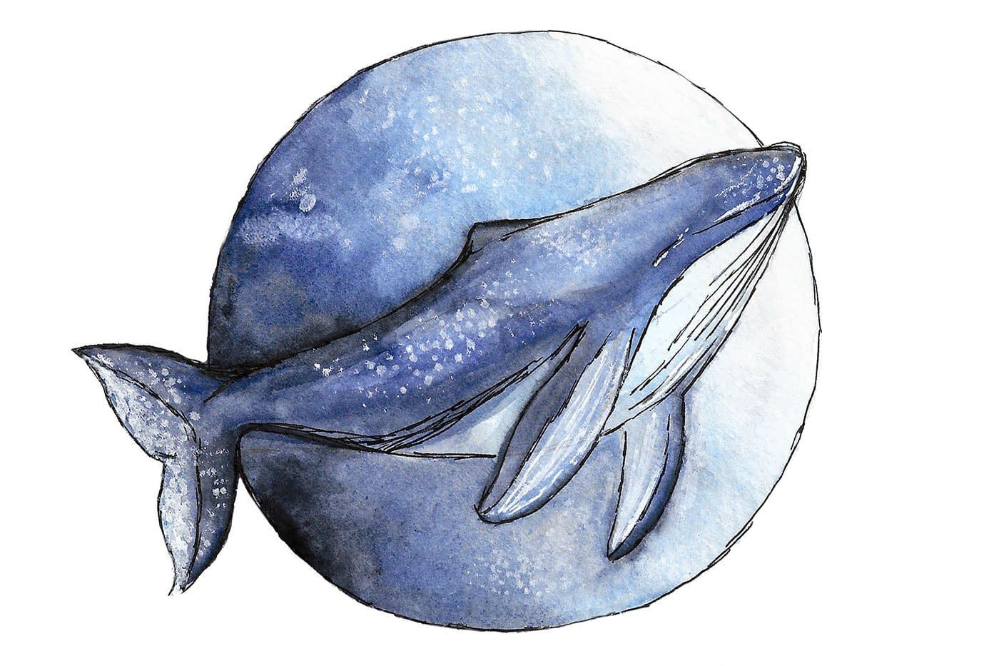 Aquarelle d'une baleine - Faustine Gauchet