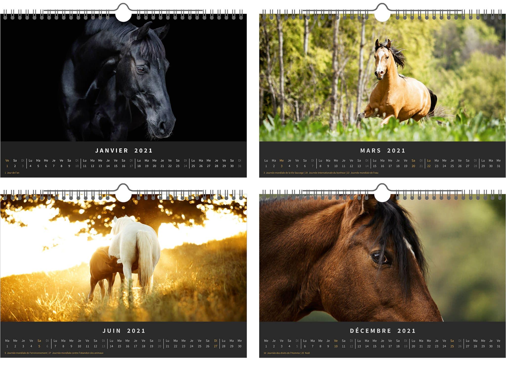 calendrier 2021 chevaux en liberté