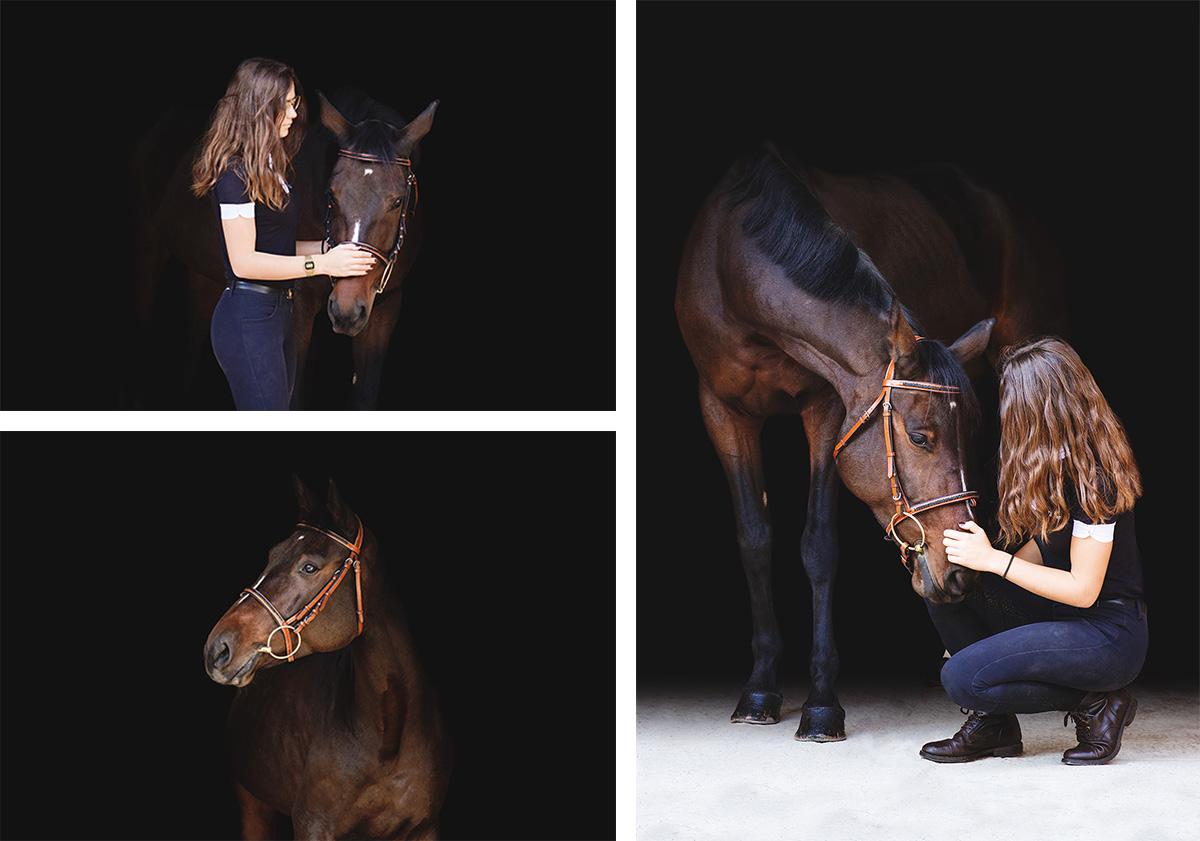 portrait cheval bai fond noir