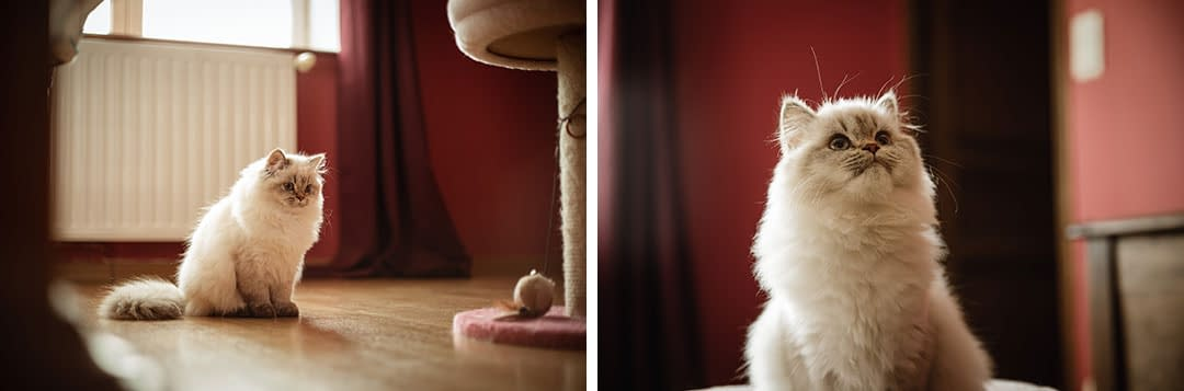 photos de chat, animal de compagnie