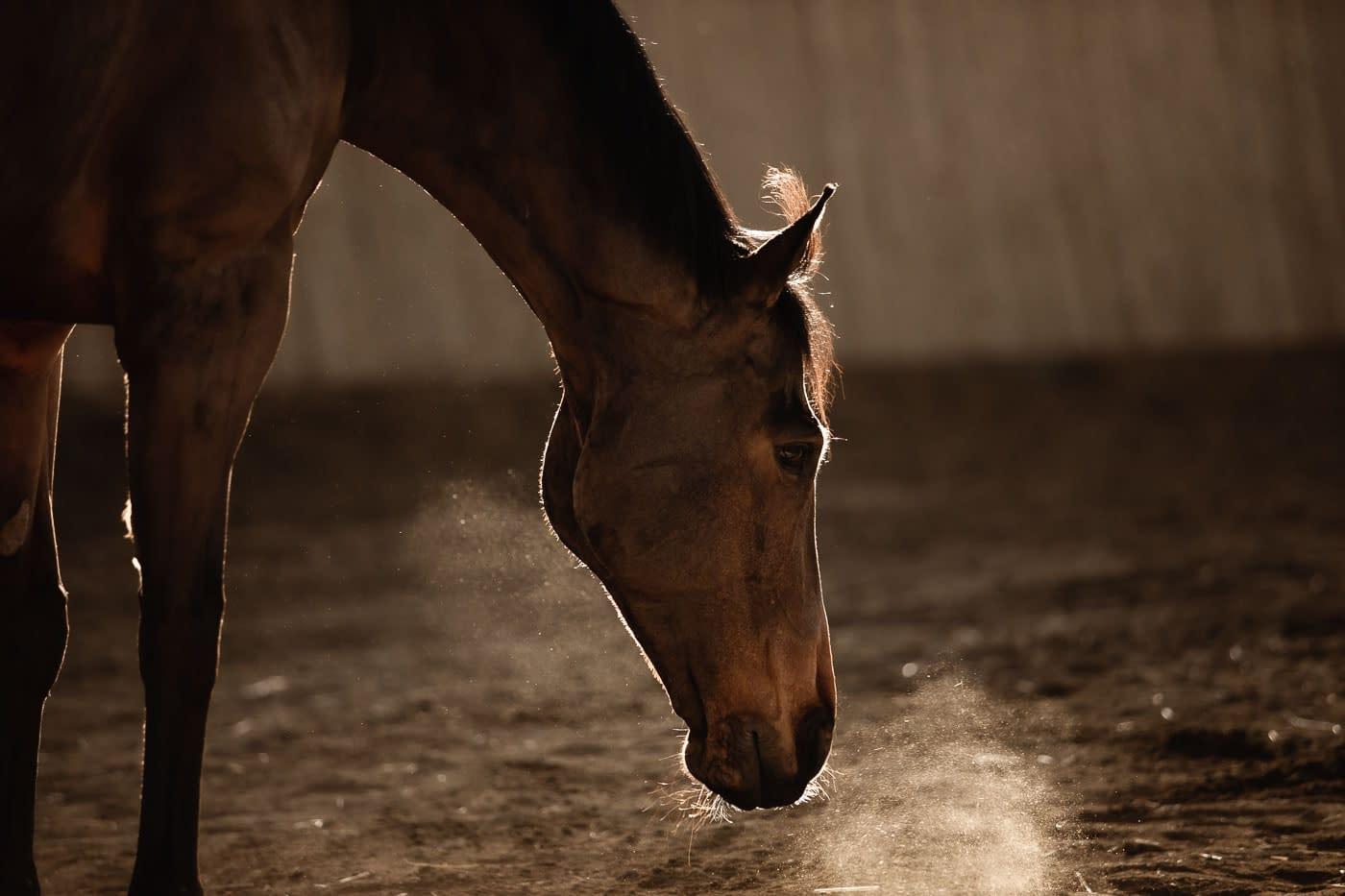 Souffle d'un cheval dans le sable - Faustine Gauchet