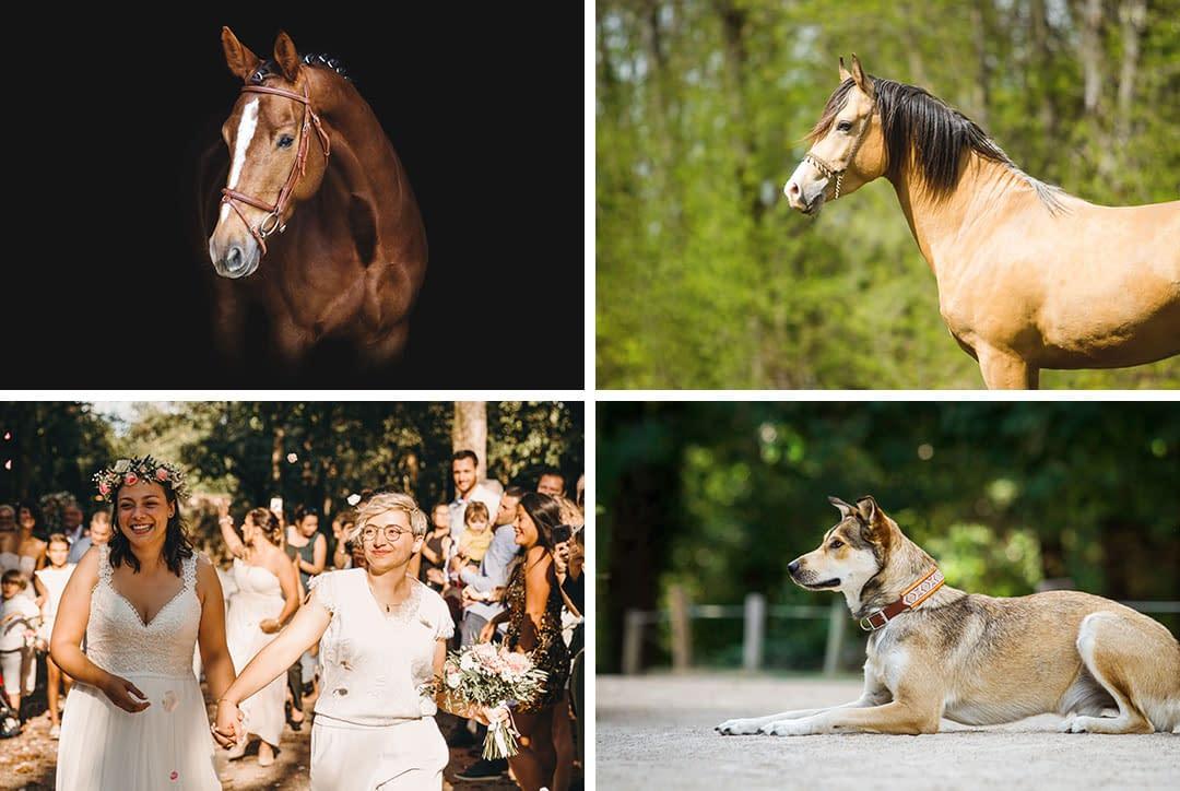 photo de chevaux, mariage, produit Horse & Ropes