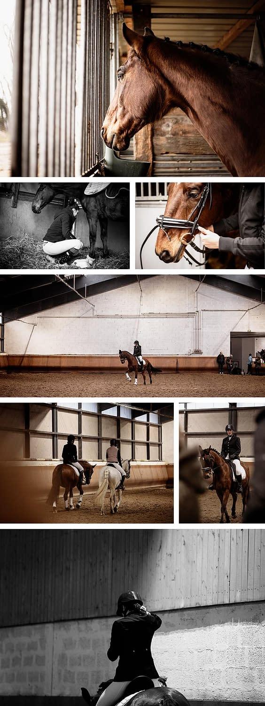 reportage compétition équestre - dressage du cheval
