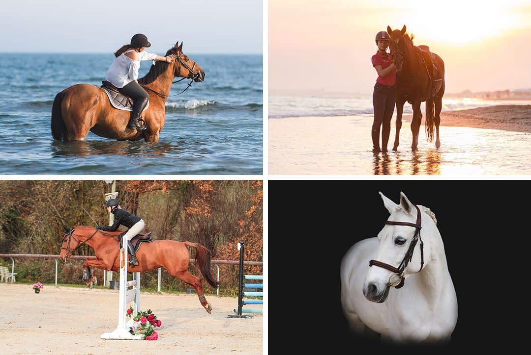 Photo de chevaux : plage, concours, fond noir