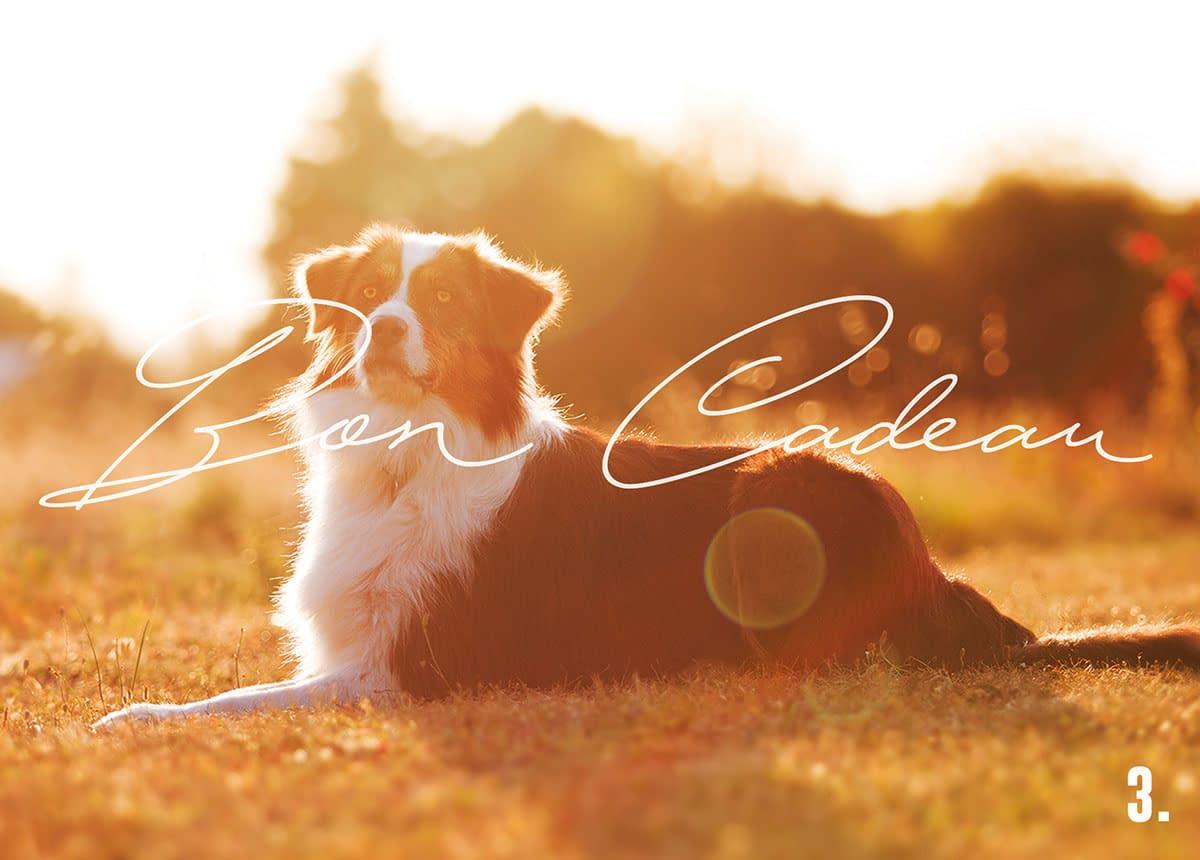 bon cadeau photo - Faustine Gauchet - design chien
