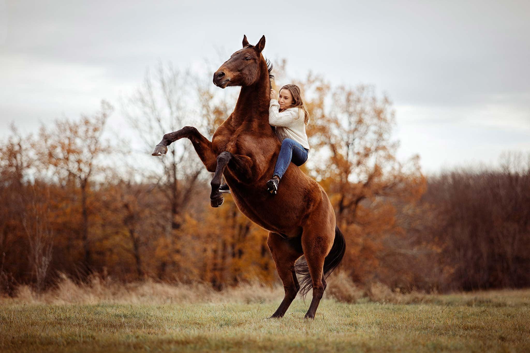 cheval cabré avec cavalière en liberté