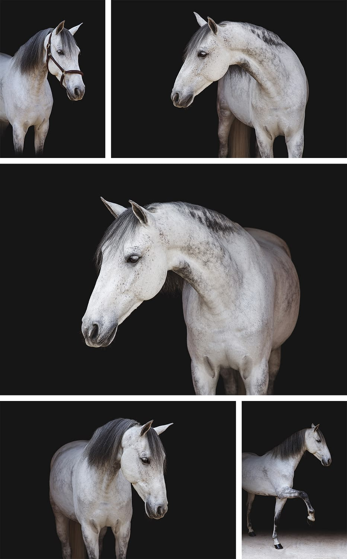 umbro cheval gris fond noir