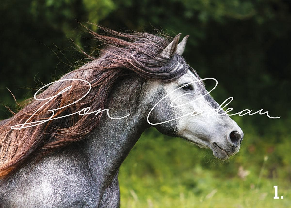 bon cadeau photo - Faustine Gauchet - design cheval