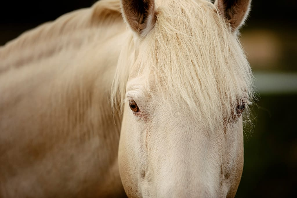 détail oeil cheval champagne cours de photographie équine Faustine Gauchet
